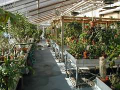 Vassar Greenhouse at Olmsted Hall of Biological Sciences