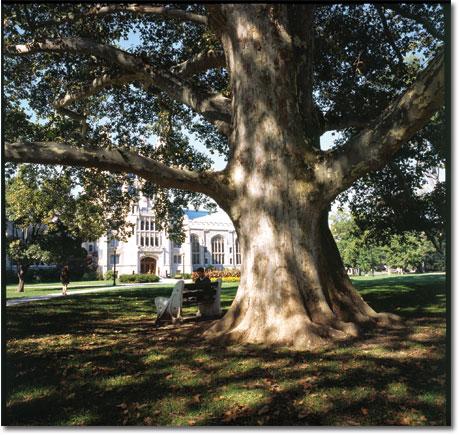 London Library Tree